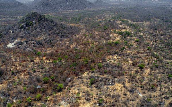 La forêt de Sambisa au Nigeria. © DR