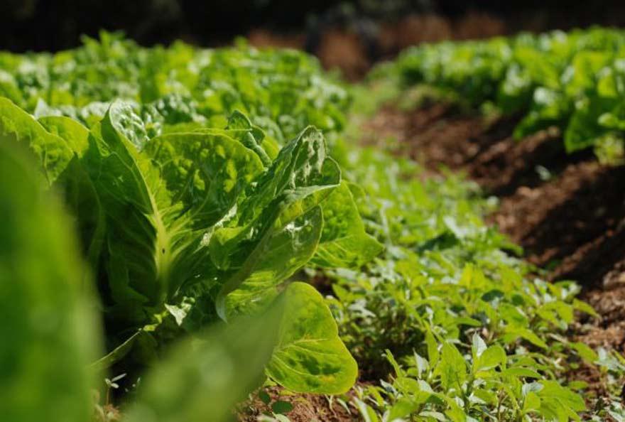 Pour lutter contre les changements climatiques, nous devons repenser notre système alimentaire