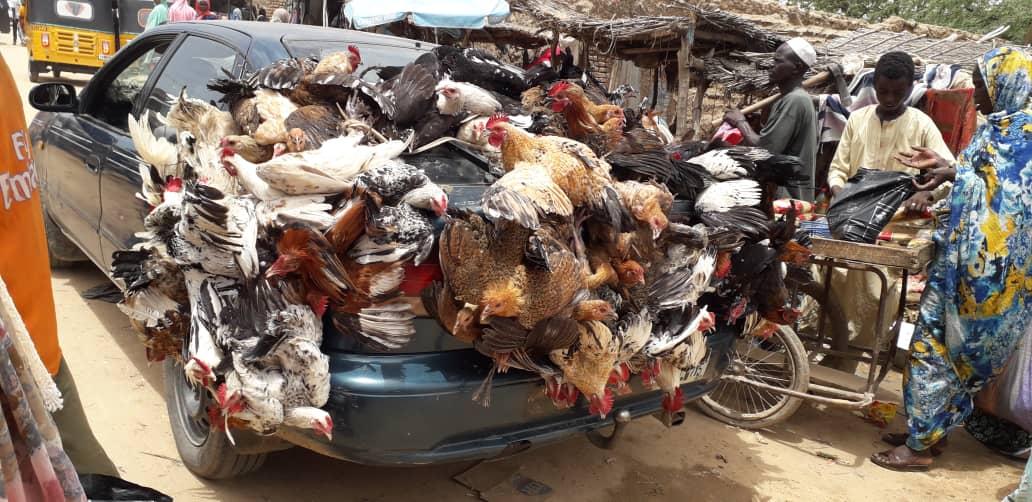 Du poulet vendu à Abéché ce samedi 10 août 2019. © Alwihda Info