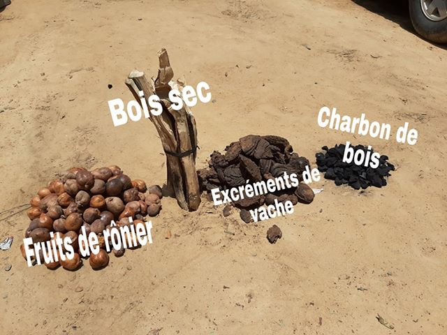 Tchad : comment réussir la semaine de l'arbre en 4 points