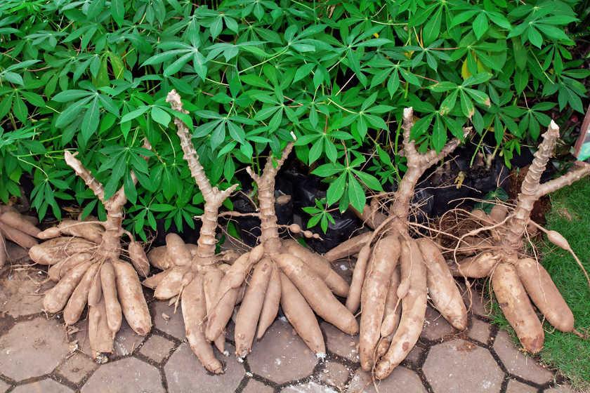 Illustration. L'agriculture au Tchad. ©Min. agriculture Tchad.