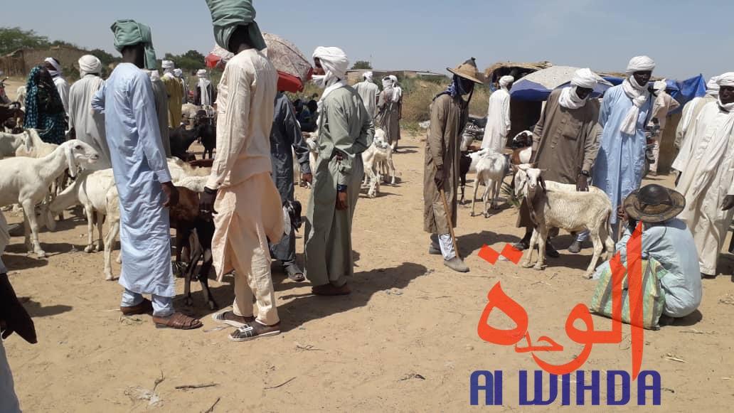 Tchad : Lina, un carrefour pour les marchands de bétail. © Alwihda Info