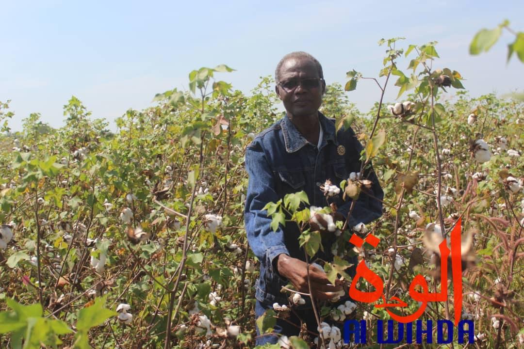 Le coordonateur du projet champs pilotes présidentiels, le député Néatobeye Le Nasseguengrar. © Alwihda Info