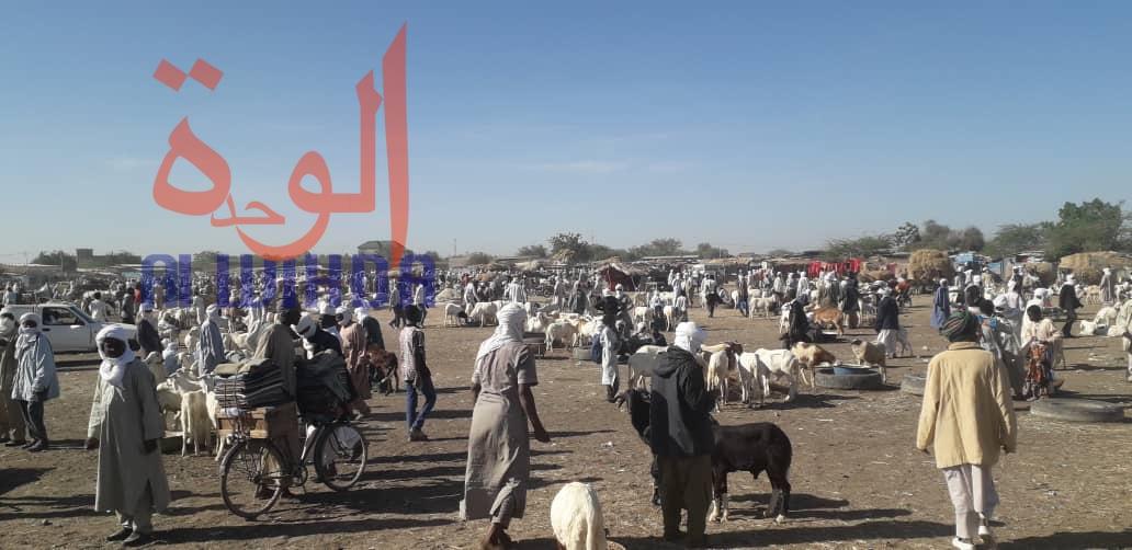 Le marché à bétail de Diguel -Souk khanam- à N'Djamena, le 2 décembre 2019. © Alwihda Info/D.H.K.