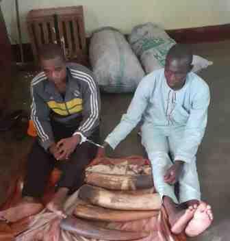 Les deux trafiquants arrêtés à Batouri.
