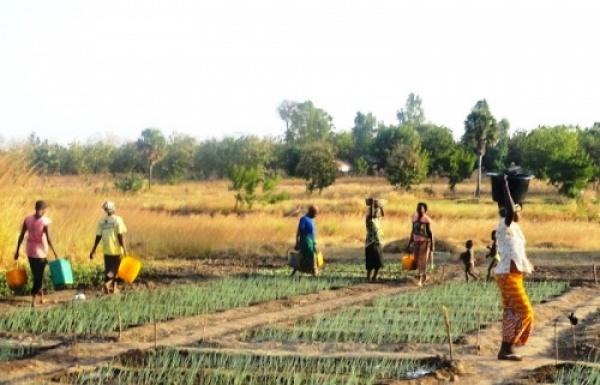Des agriculteurs au Togo. © DR/Togo First