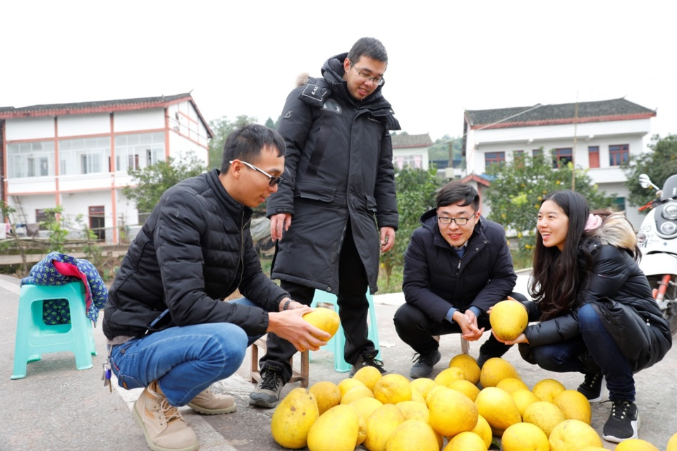 Buyers purchase grapefruits from farmers in Gexin village. Photo by Wang Mingfeng,