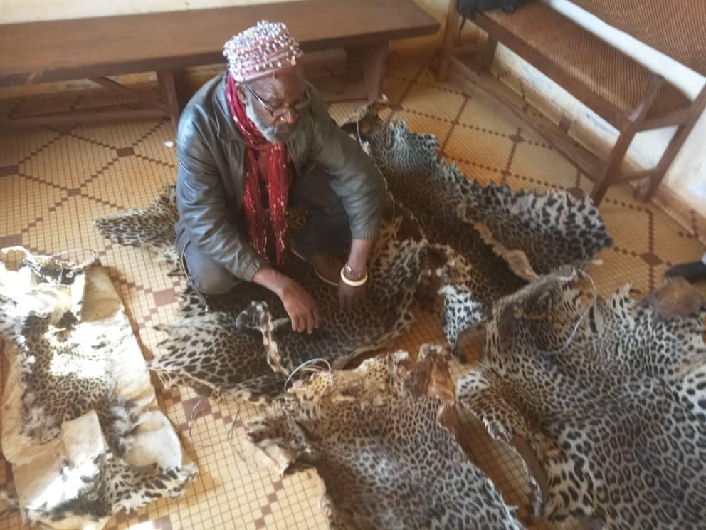 Le trafiquant d'espèces sauvages arrêté avec cinq  peaux de panthère.