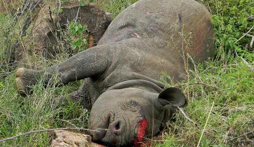 L'Homme, responsable de la disparition de la plupart des espèces animales et végétales. © DR