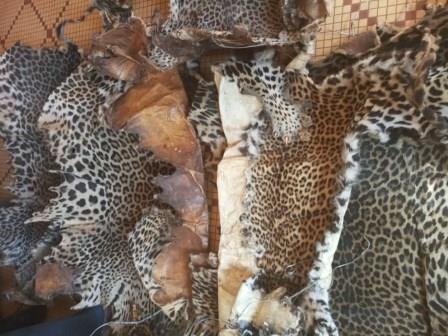 Cameroun/Bandjoun : Des trafiquants d'espèces au Tribunal