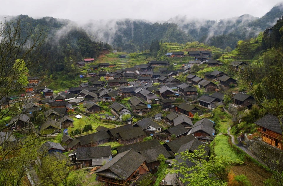 Wengcao village in Guzhang county, Xiangxi Tujia and Miao Autonomous Prefecture in central China's Hunan province is home to more than 800 redisents from 180 households. It is a village of Miao ethnic group. It picks the first batch of tea leaves this spring. Photo by Chen Bisheng, People's Daily Online
