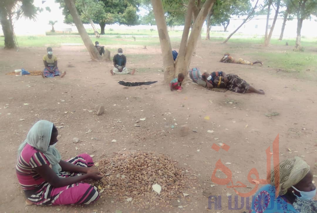 Tchad - Covid-19 : 27 voyageurs frauduleux interpellés à 25 km de Doba. © Frédéric Ngardodim/Alwihda Info