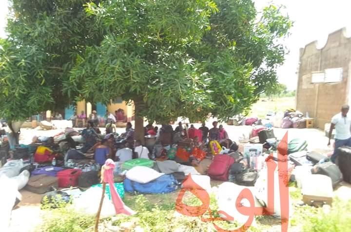 Tchad : près de 600 étudiants bloqués à Koutéré, tractations en cours avec le Cameroun. © Golmen Ali/Alwihda Info