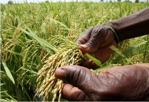 Tchad : L'Etat doit miser plus sur l'agriculture et venir en aide à la population pour booster ce secteur: ©️ Abba Issa/Alwihda Info