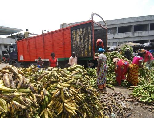 Les femmes sont en première ligne pour approvisionner les marchés en cette période de crise sanitaire