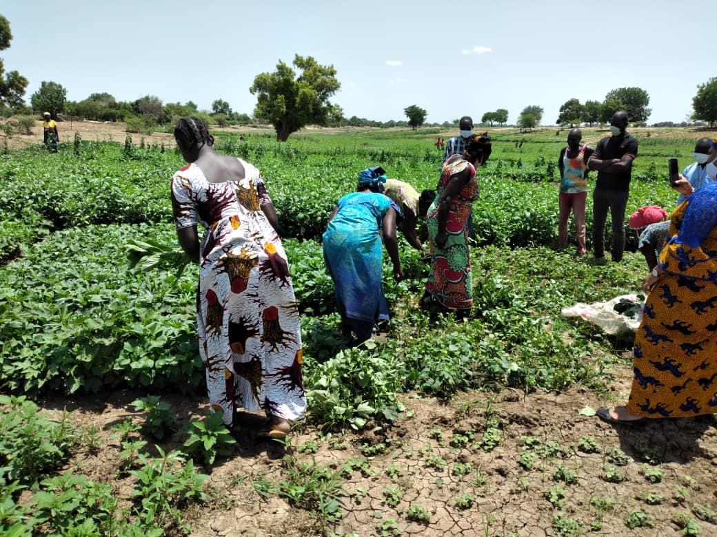 Tchad : culture maraichère, des projets agricoles portent leurs fruits à N'Djamena