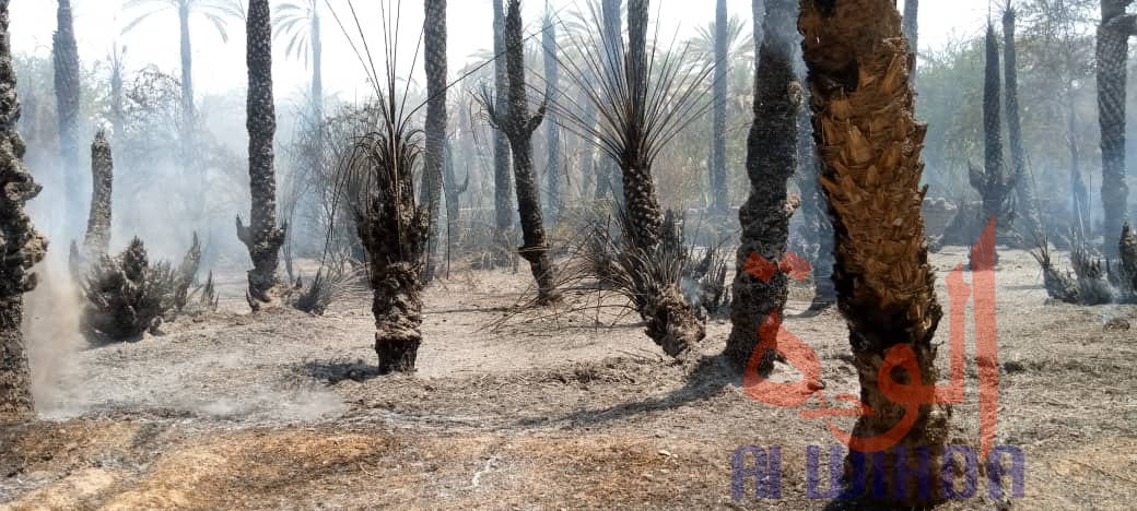 Tchad : des palmeraies ravagées par un incendie à Faya