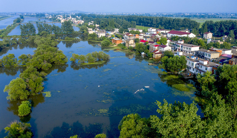 Photo taken on June 25 shows the Yangliu wetland in Baihu township, Lujiang county, Hefei, East China's Anhui Province. Photo by Zuo Xuechang/People's Daily Online