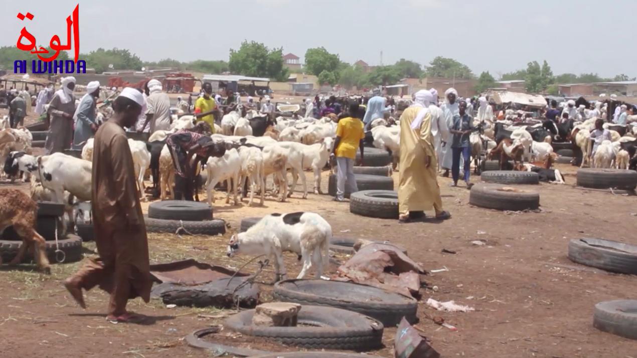 Un marché de bétail à N'Djamena, au Tchad. © Kelvin Djetoyo/Alwihda Info