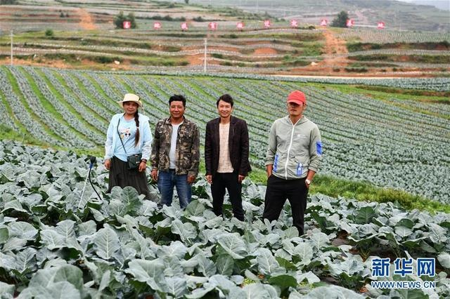 He Xianchao (second from right), farmer in Weining County, Guizhou Province, took a group photo with other relocated households in their joint vegetable base (photo taken on June 17). Photo by Xinhua News Agency