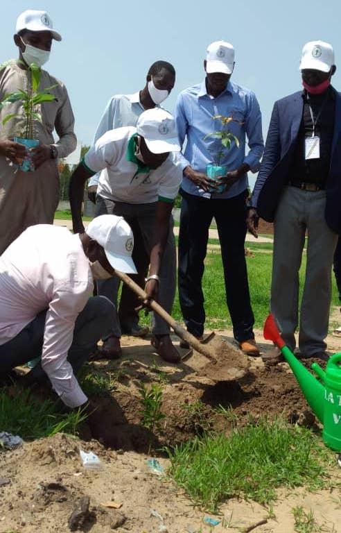 Tchad : planter des arbres pour protéger l'environnement, un autre défi de l'heure. © Malick Mahamat/Alwihda Info