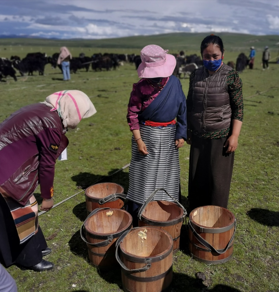 Herdswomen are busy working. (Photo by Li Changyu/People's Daily)