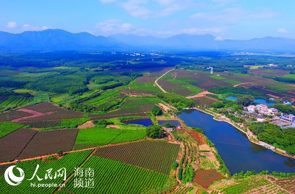Tea gardens in Baisha Photo: People's Daily Online