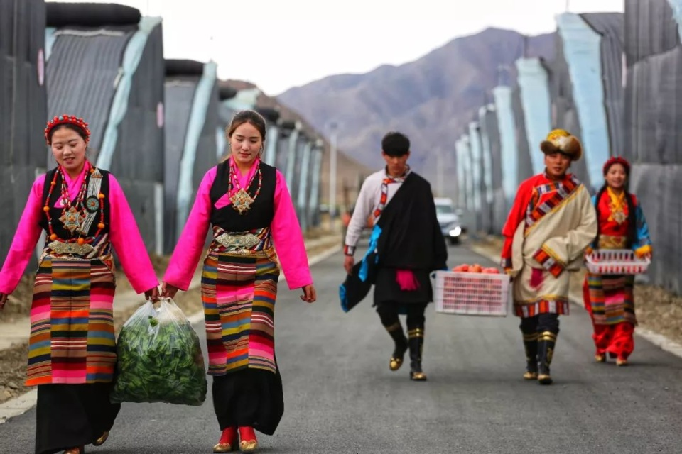 Farmers pick vegetables and fruits in Bainang county, Xigaze, southwest China's Tibet autonomous region. (Photo/Official WeChat account of the publicity department of Bainang county)