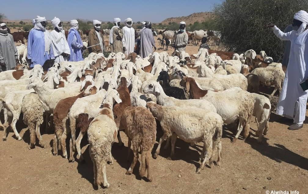 Tchad : Vaccination contre la péripneumonie contagieuse bovine et la peste dans le Ouaddaï