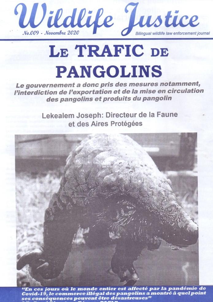Cameroun : « Wildlife Justice Journal » se penche sur le trafic de pangolins