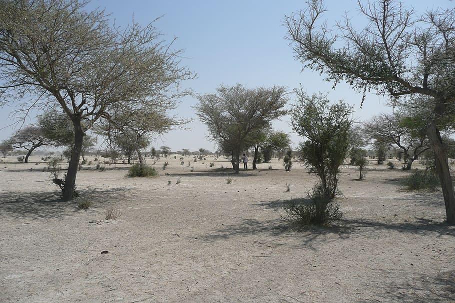 La désertification du Sahel est un problème mondial. ©DR