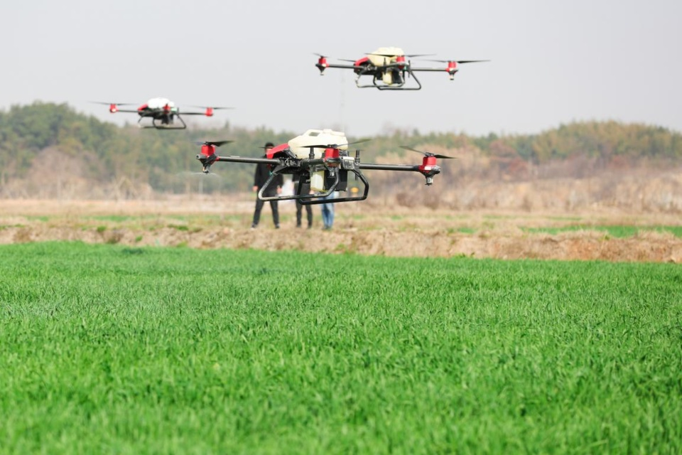 An agricultural spraying drone is working in a wheat field in Dongheng village, Luoshe Township, Deqing County, Huzhou, east China's Zhejiang Province, Feb. 22. (Photo by Wang Zheng/People's Daily Online)