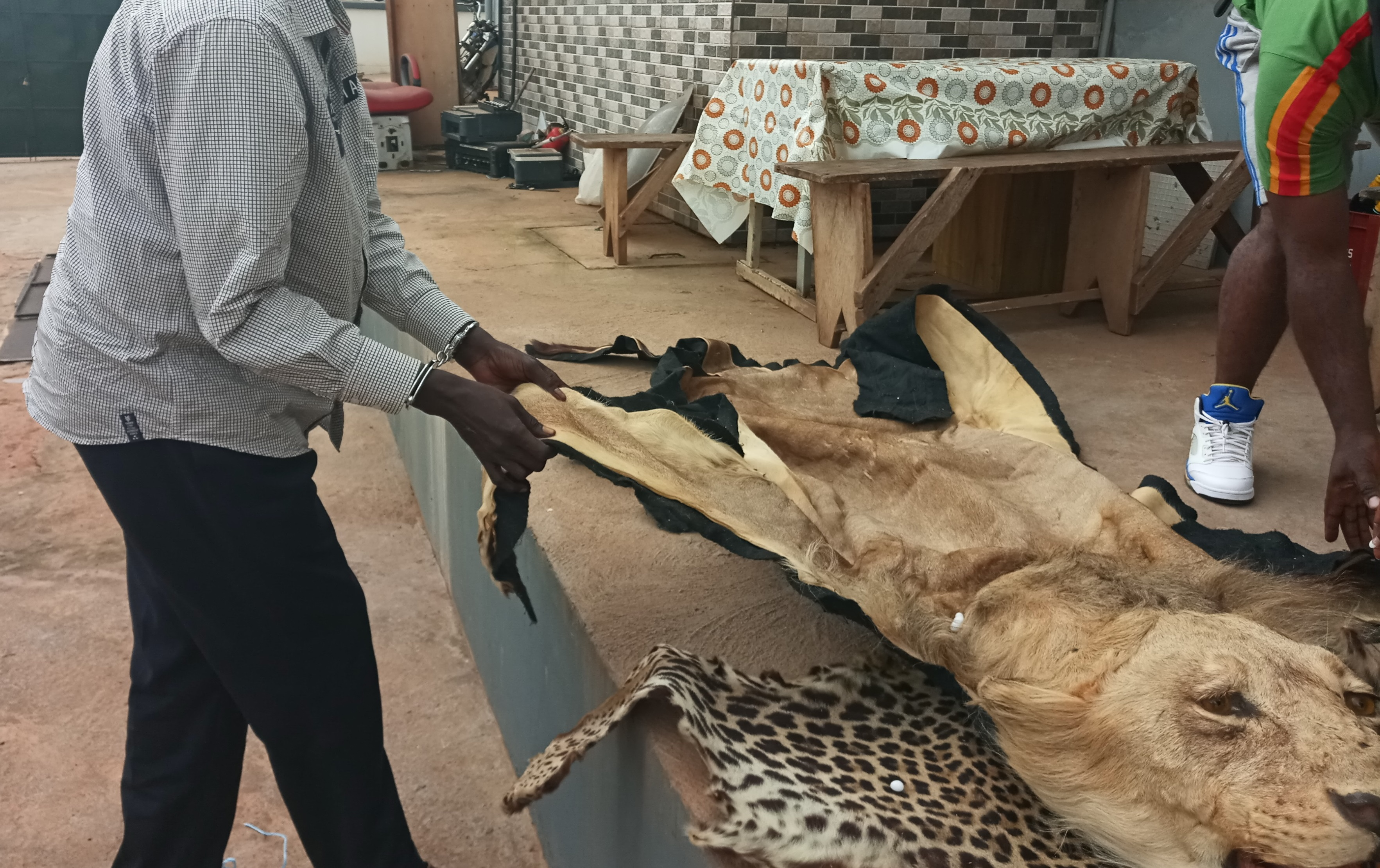 Cameroun : Deux trafiquants d'espèces sauvages devant le Tribunal à Yaoundé
