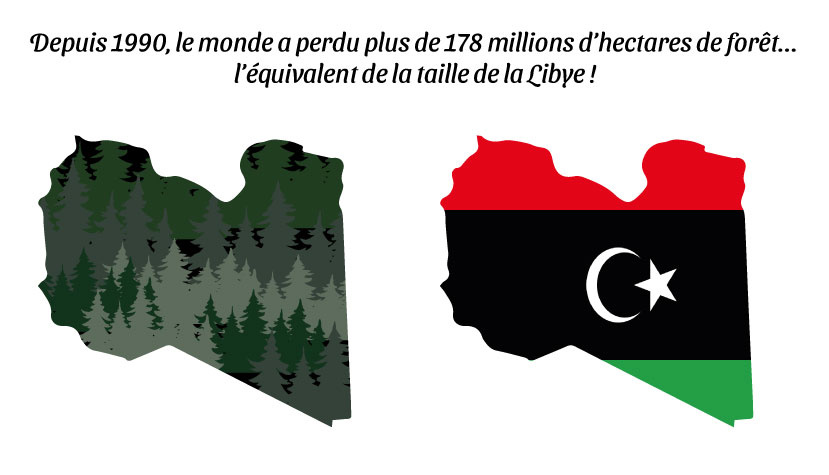 Depuis 1990, le monde a perdu plus de 178 millions d'hectares de forêt... l'équivalent de la taille de la Libye ! - par Gilles Berdugo.