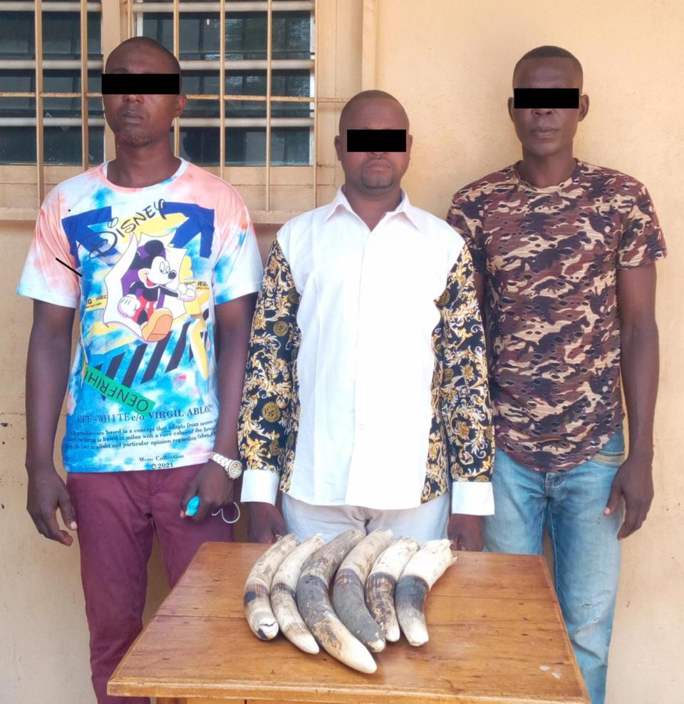 Togo : 7 présumés trafiquants d'ivoire arrêtés et déférés