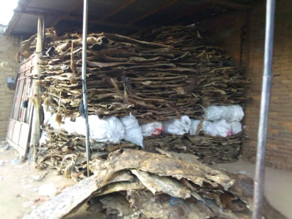 Exportation des peaux d'animaux, le Tchad est un grand perdant