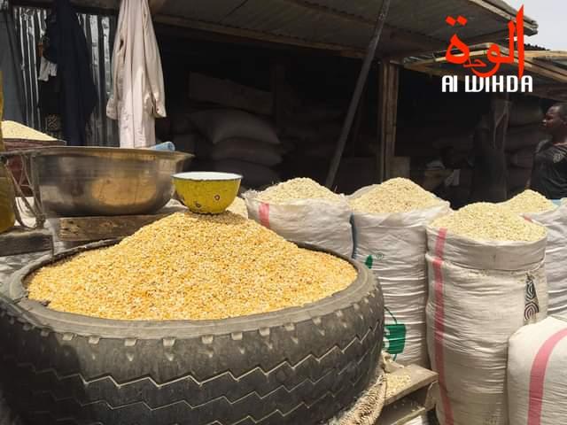 Tchad : la pauvreté et l'insécurité alimentaire gagnent du terrain