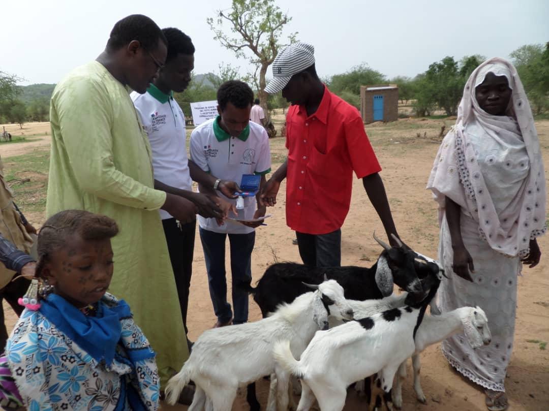 Tchad : l'ONG Guéra Touristique offre 585 têtes de petits ruminants à la population de Korko