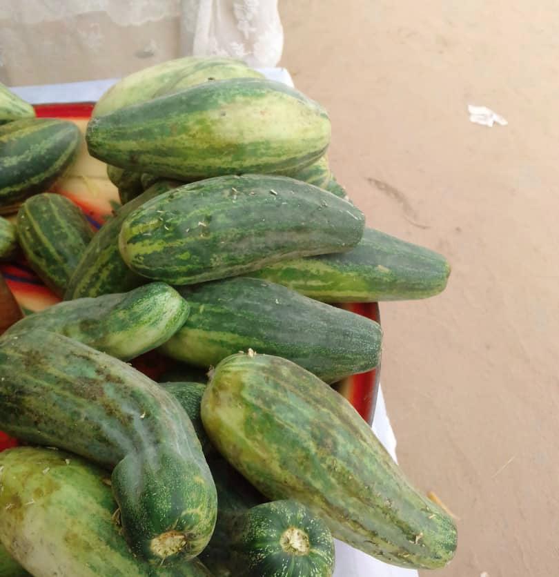 Tchad : le concombre, un aliment aux multiples bienfaits pour la santé