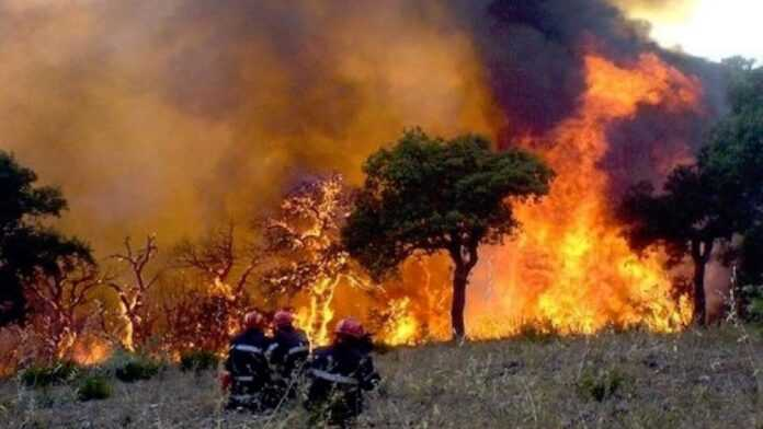 Algérie : des incendies meurtriers embrasent la Kabylie