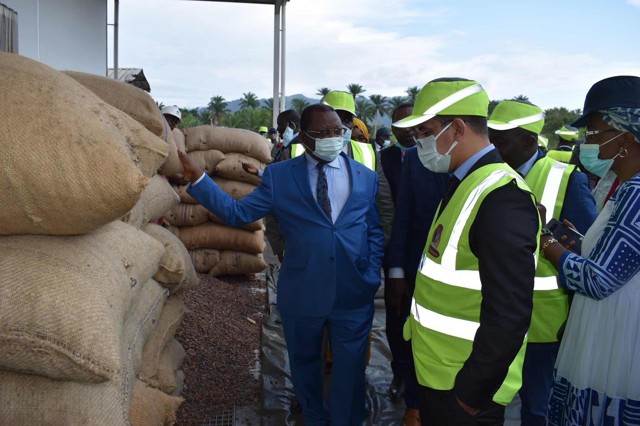 Cameroun : la campagne cacaoyère 2021-2022 est lancée