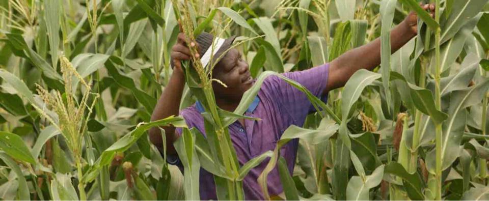 Zimbabwe : les succès agricoles d'un réfugié au camp de Tongogara