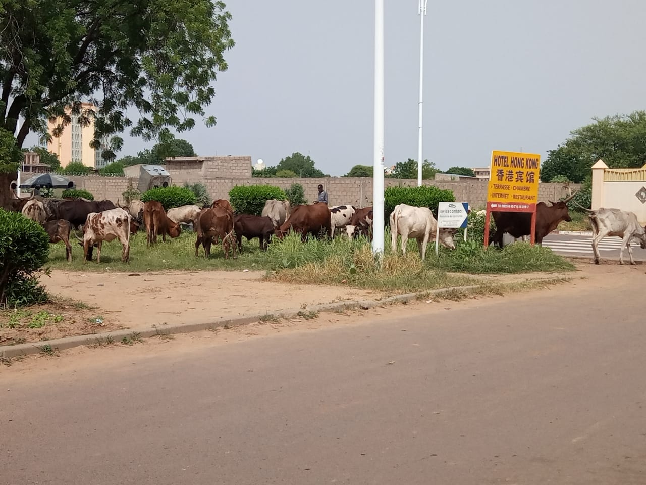 Tchad : l'élevage en pleine capitale, dans les espaces de détente