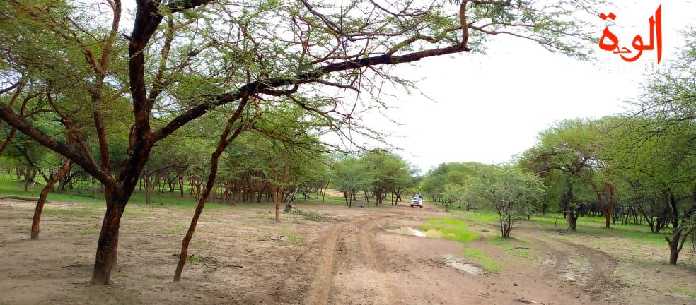 Tchad : atroce assassinat au Sila, un homme a tué son ex-femme à Bechaketek