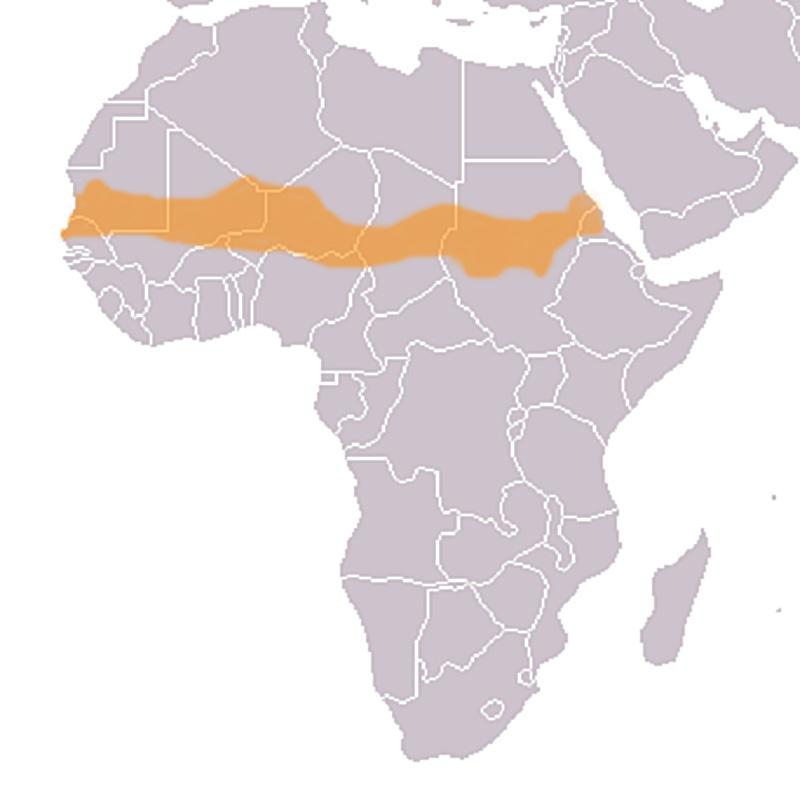 Sahel. Photo : Wikipedia