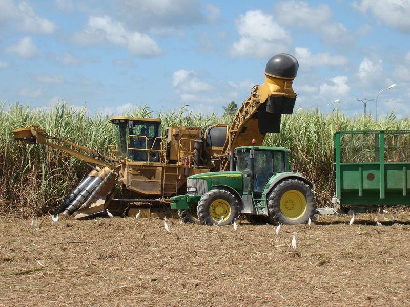 La SOSUCAM s'engage pour la modernisation de l'agriculture au Cameroun