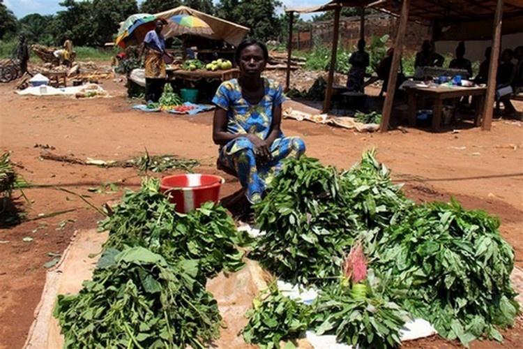 Centrafrique : Derrière la crise humanitaire et sécuritaire, une crise économique grave se profile