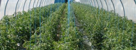 Agro-Industrie Africaine : Fonds pour l'accélération du développement agricole