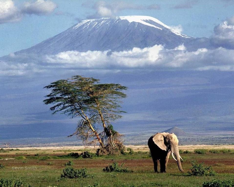Tourisme : Comment réussir votre  Safari ?