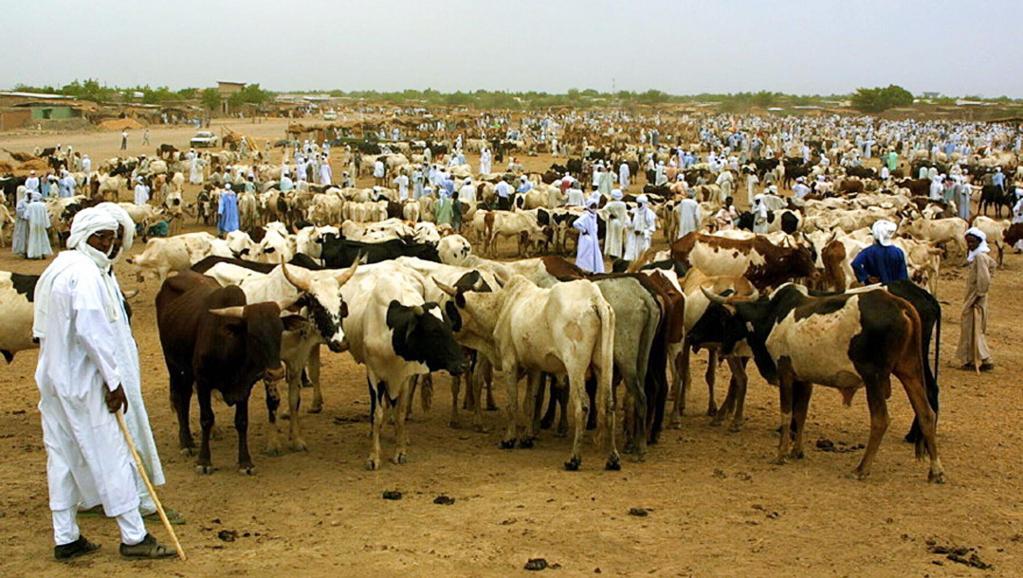 Un éleveur de bétail au Tchad. AFP PHOTO DESIREY MINKOH